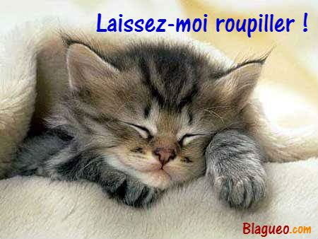 Chat qui roupille