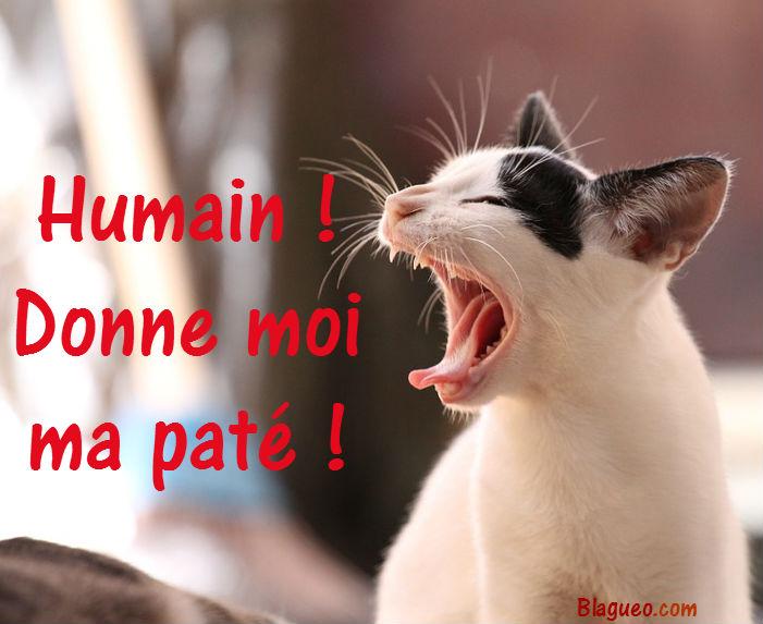 chat révolution