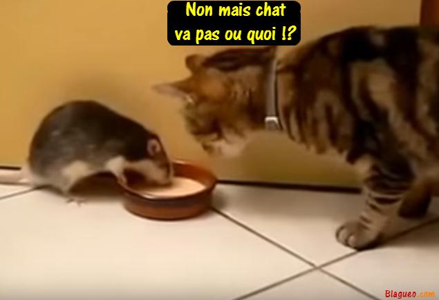 chat va pas
