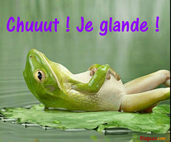 Grenouille glandeuse