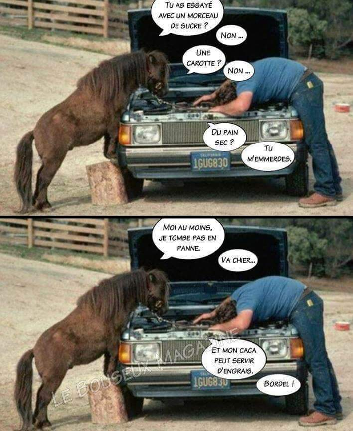 Voiture vs cheval